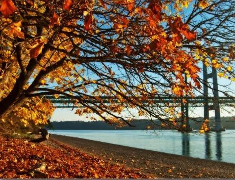 Narrows Park, fall leaves